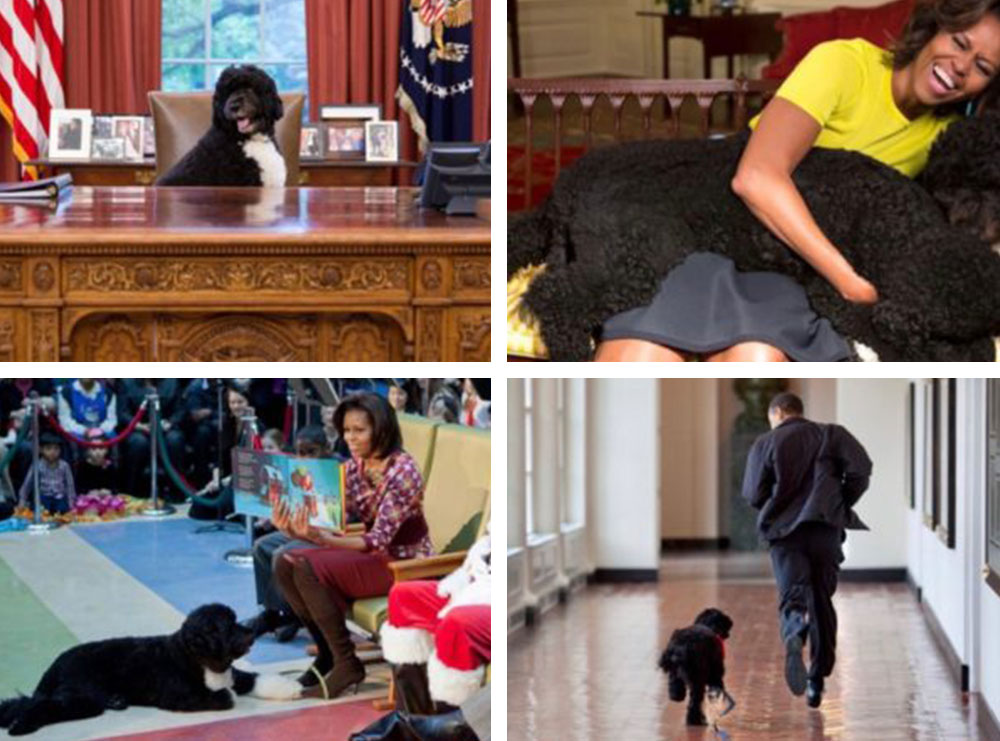 Ditë zie në familje Obama, qenushi presidencial humb betejën me kancerin