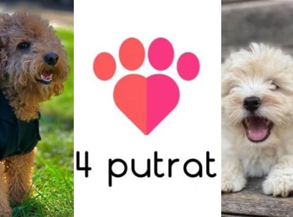 """Janë të gjithë të dashuruar me macet dhe qenushët tek """"Pet Shop 4 Putrat"""""""